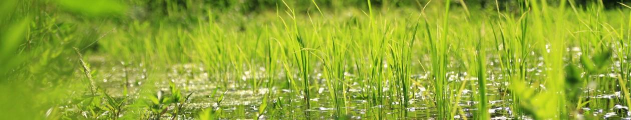 茶碗一杯から始めるロハスな生活。自然環境を良くする「やまびこ米」新潟米農家の日記